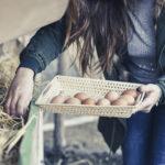 raccolta delle uova di arianna