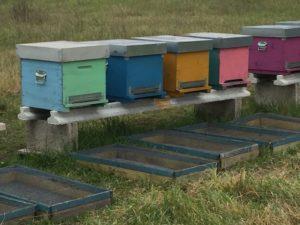 arnie colorate biofarm miele