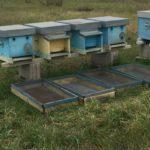 apertura delle arnie in biofarm miele